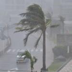 台風8号には「ノグリー」という名前が?日本語で「たぬき」